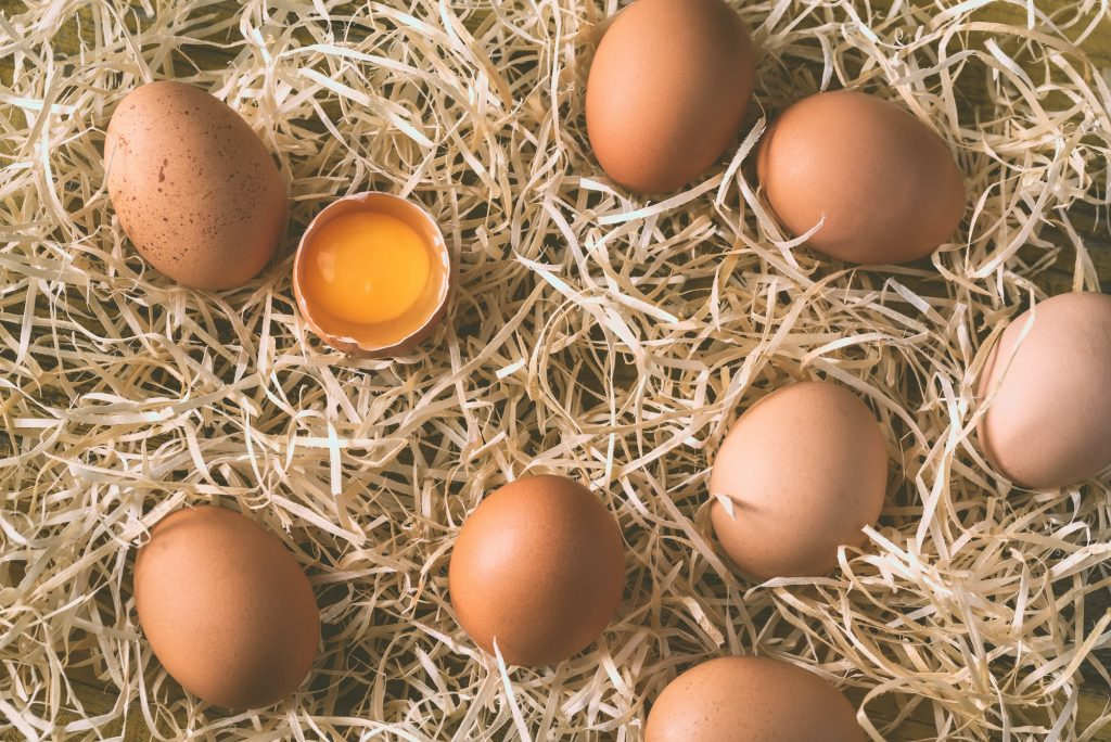 Are Raw Eggs Safe For Dogs
