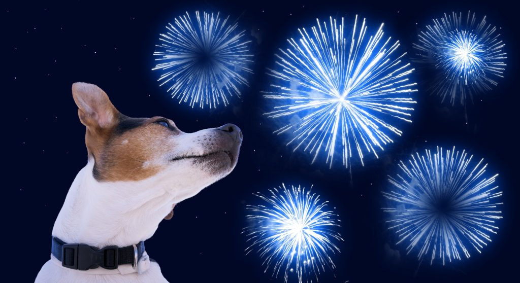 Why don't dogs like fireworks?